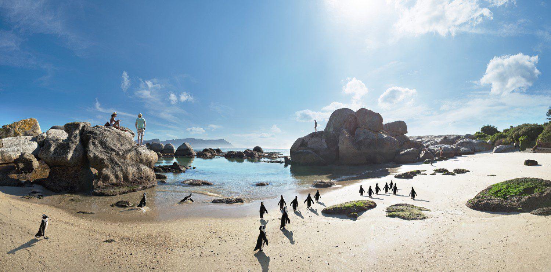 boulders-beach_penguins